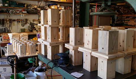 POPS-SHOP-CARPENTER-BEE-TRAPS-4