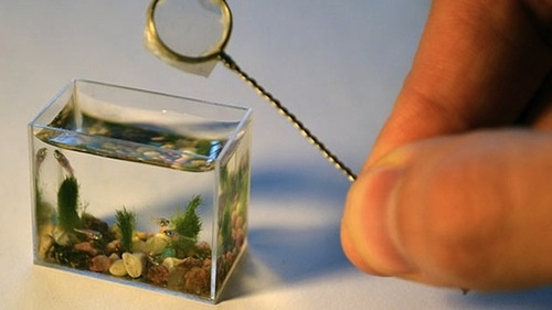 Teeny-tiny Aquarium - where there is no privacy