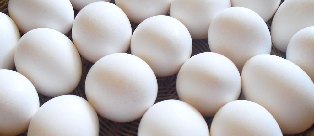 eggs poached or boiled